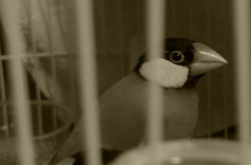 2009/12/9 Day 20 囚