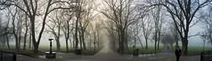 Meadows Fog Panorama (Surely Not) Tags: park panorama mist tree fog lumix scotland edinburgh meadows panasonic lx3 yourphototips