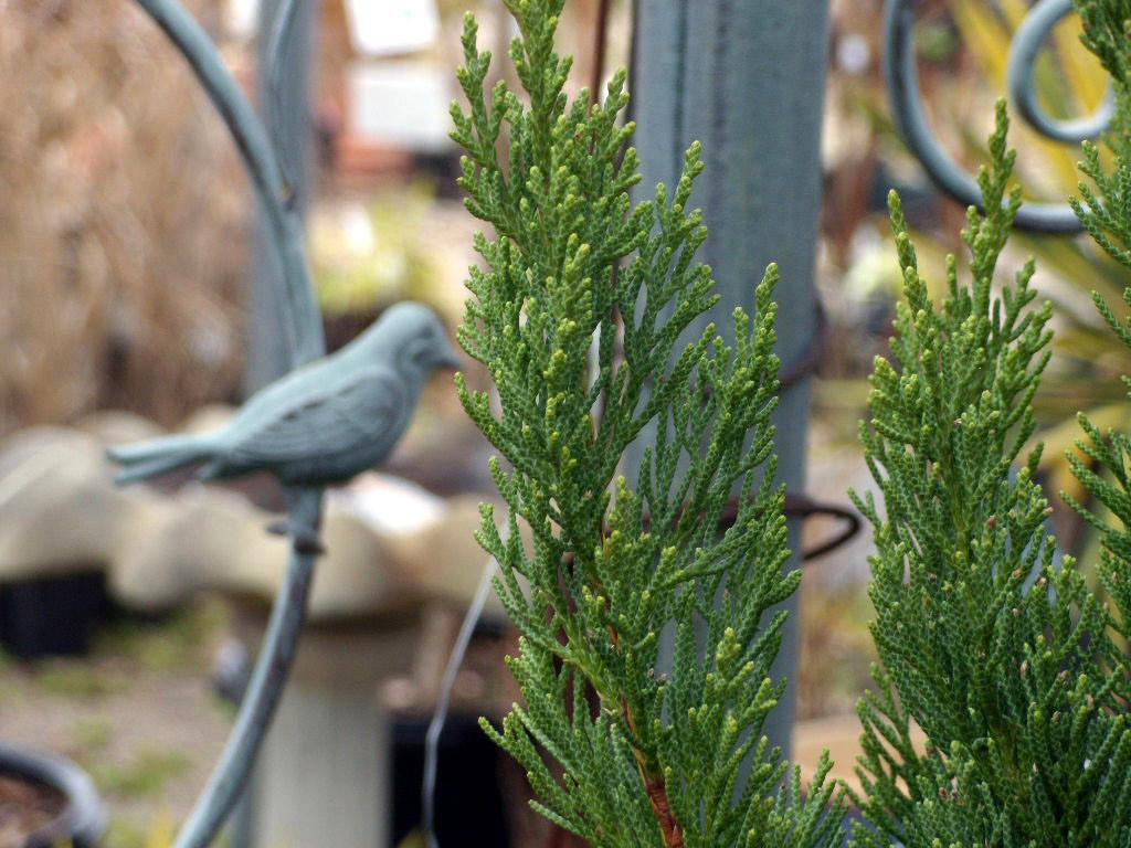 a bird a pine