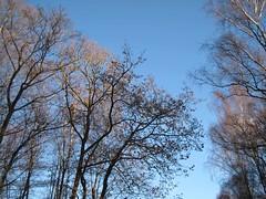 New Forest II (farmerytwang) Tags: uk trees clouds skies hampshire newforest deerleap