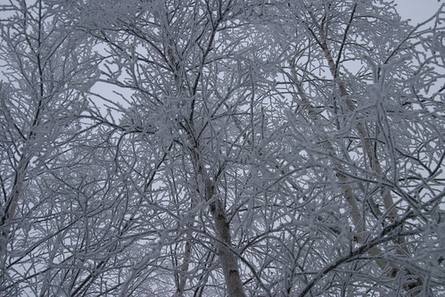 tree and snow 082