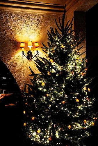 bonita tree.