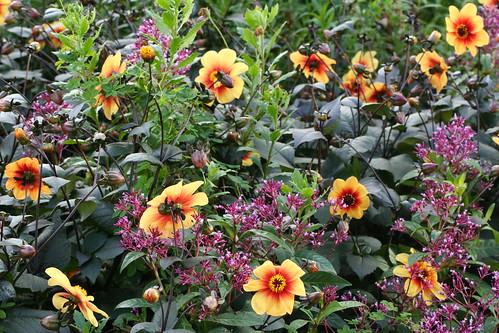 20090919 Edinburgh 20 Royal Botanic Garden 335