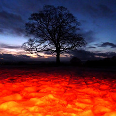 winter tree with red snow (pho-Tony) Tags: park trees winter snow color colour tree night square long exposure dusk flash graves filter lone lonely neige gel colorsplash coloursplash lonelytree strobe colourflash noiseware gravespark strobist gravesparktree