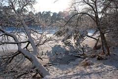 WinterOisterwijk2010-18 (Joris Leermakers) Tags: winter sneeuw oisterwijk januari2010