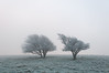 South Downs National Park (Laurence Cartwright) Tags: uk trees mist ice sussex photo nationalpark 8 photograph nationaltrust southdowns devilsdyke anawesomeshot fulkingescarpment laurencecartwright