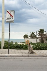 Cane trasgressore (Lawbreaker Dog) (Mr Korn Flakes) Tags: road sea dog cane strada mare divieto molfetta forbiddance