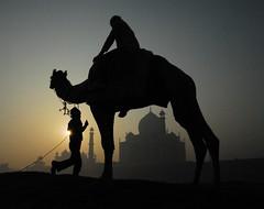 Morning at the Taj (Dave Schreier) Tags: india sunrise bravo taj mahal agra camel
