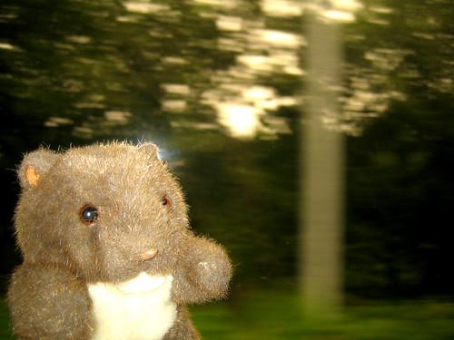 Wombat on the train