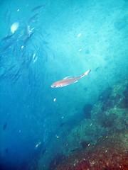 costa rica underwater 009