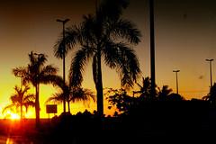 (renatabenia) Tags: sunset sky cu prdosol bahia coqueiros alagoinhas kodakm863