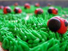 Lady Bug Cupcakes (disneychick) Tags: red black green grass cupcakes cupcake ladybug fondant buttercream