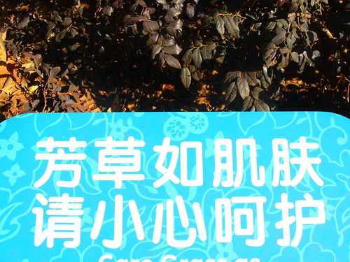 Take care of the grass