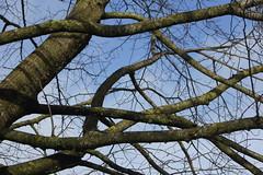 DSC00017 (Sarah Bailey) Tags: park dyrham 170110