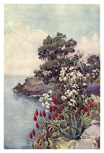 007-Aloes y margaritas en Madeira-The flowers and gardens of Madeira - Du Cane Florence 1909