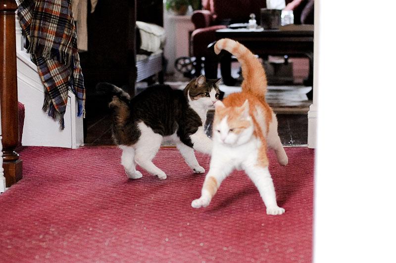 Cat fight!