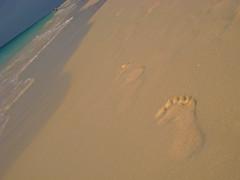 Aruba - Footprints in the sand (Harshil.Shah) Tags: sea beach sand footprints
