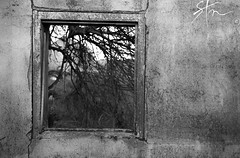 The Growing Shadow of a Tree (Karlstrom Photography) Tags: old white black tree window wall point grey focus empty perspective forgotten through cracks broke