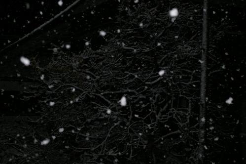 2010/02/01 雪が降る