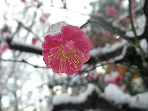 Winter blossoms