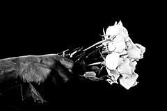 [ Day 26 \ 365 ] ..   To Pain ~ (Ruaa AlAbdulRahman) Tags: roses white black rose hand sad p hold            pp