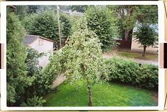 (Robert Laursoo) Tags: film 35mm 2007 tartu kodu aed unapuu