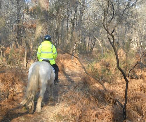 Ballade pour Equine Rescue 4354189928_77d785c6f5
