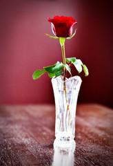 Happy Valentines Day 45/365