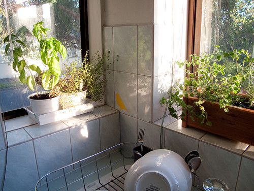 sunny spot of my kitchen