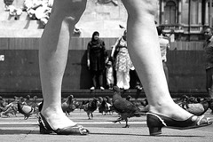 (05)LA 27 (Donato Buccella / sibemolle) Tags: street blackandwhite bw italy milan legs milano pigeons streetphotography duomo lowangle canon400d sibemolle fotografiastradale