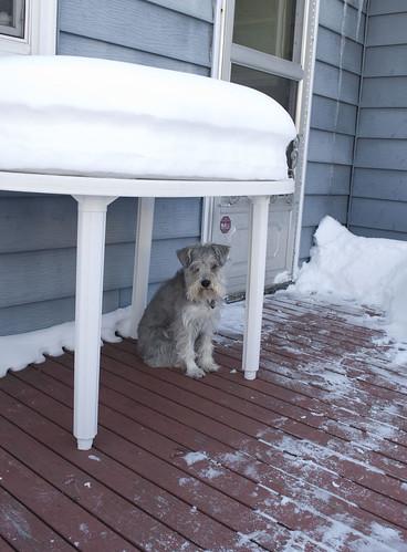 harpo's wait spot