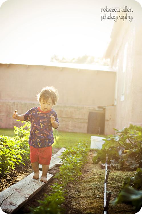 gardensun2