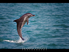 Freedom (Shabbir Ferdous) Tags: blue sea color