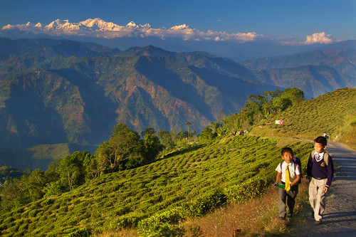 Living on Mountains of Tea - Darjeeling, by Daniel Peckham, on Flickr