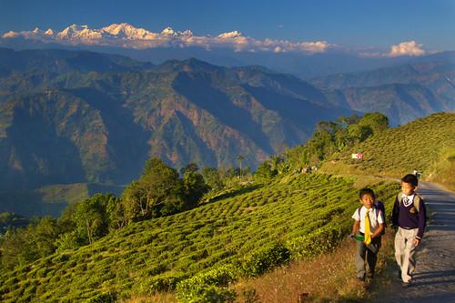 Living on Mountains of Tea - Darjeeling, by Daniel Peckham, on Flickr