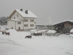 View from our chalet (during dump) (le_sloth) Tags: winter snow austria cattle highland snowboard stanton 2010 nasserein