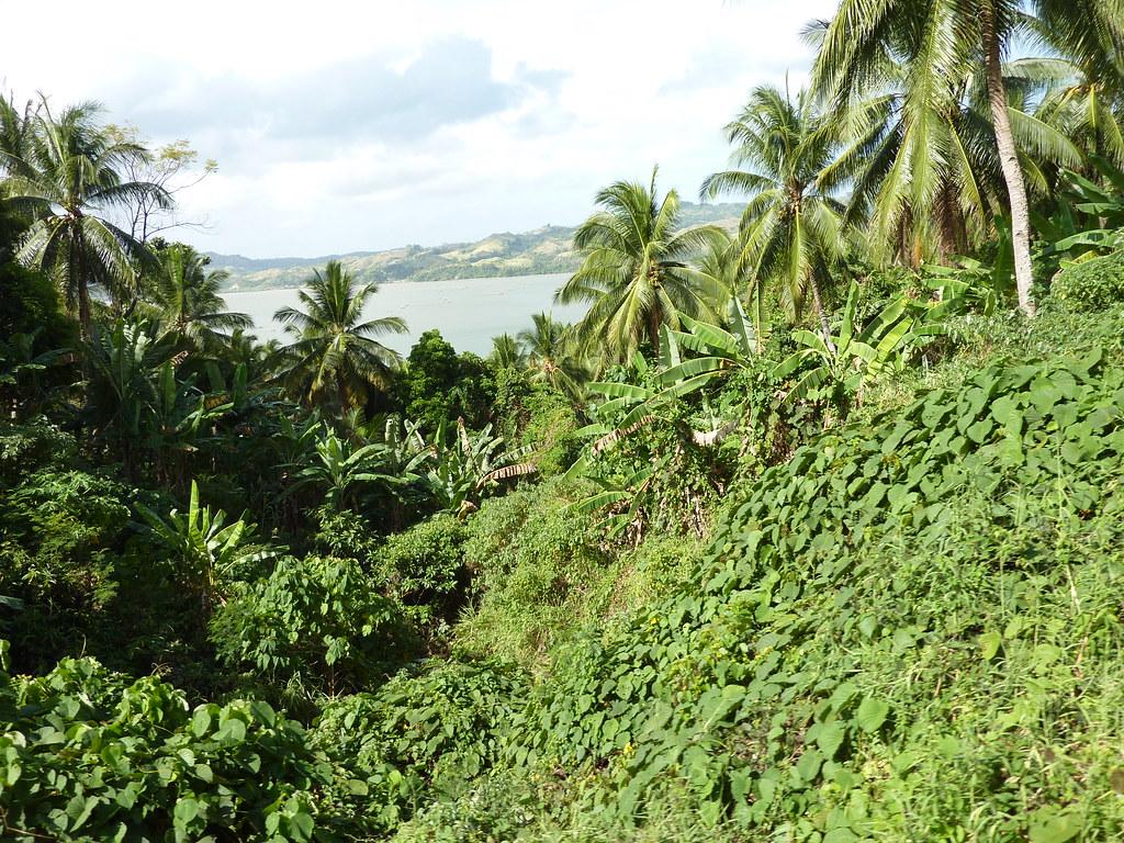 Leyte-Ormoc (29)