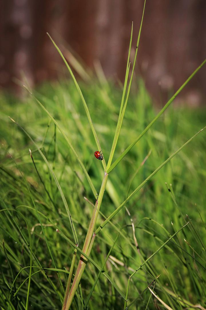 mr.ladybug