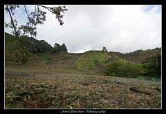 IMG_8363 (Dan Awestrike) Tags: photography malaysia cameronhighlands teaplantation