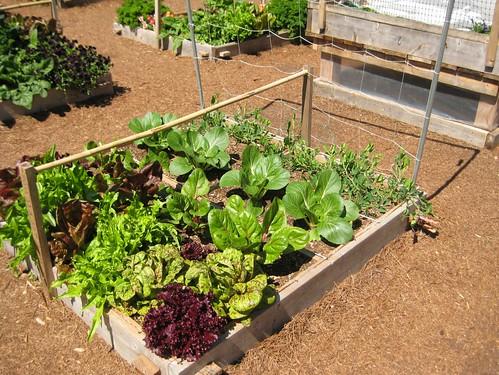 square foot gardening demo