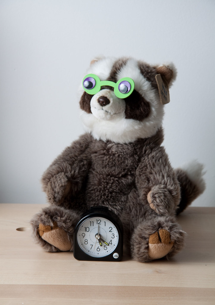 Completely Bonkers Raccoon with alarm clock from The Fox And The Polar Bear