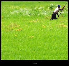 """Green Grass"" (cisco ) Tags: portrait verde green grass erba cisco laos ritratto donkhong champasak siphandon presenza photographia photographia maggio2011challengewinnercontest"