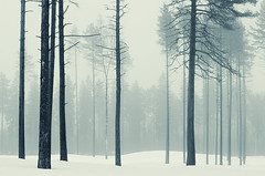 Harmony (Latyrx) Tags: light shadow mist fog photoshop suomi finland photography photo woods nikon graphic forrest stock perspective finnish nikkor sell 70300mm mikko 2010 resize latyrx d90 nikond90 mikkolagerstedt