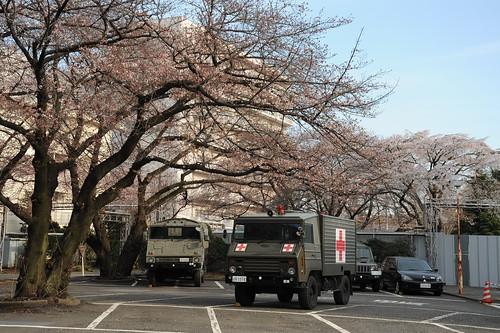 桜と自衛隊