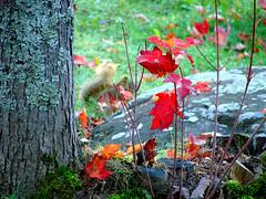 DSC01614 (Brandy Hamilton) Tags: fall saultstemarie 106shoot
