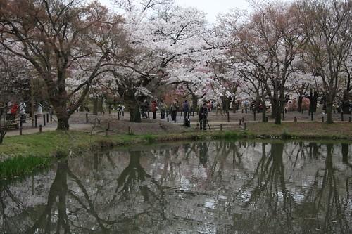 春爛漫 Scenery of the spring