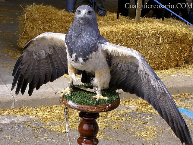 Aves extraordinarias I - toma II