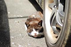 cats_2010-04-13_4