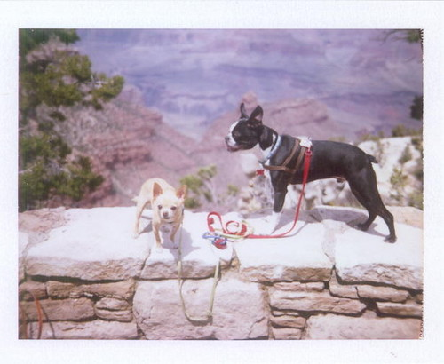 floyd and ivan at the grand canyon