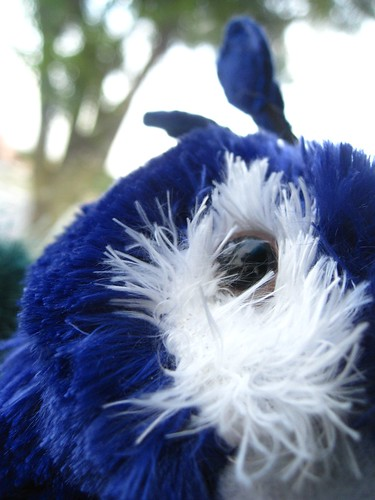 Fuzzy Eye